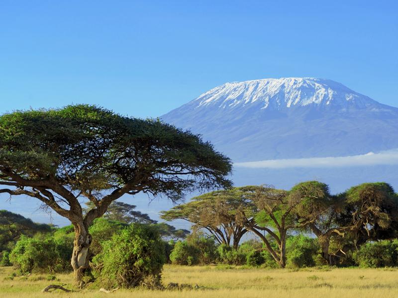 Tanzania stock 1.jpg
