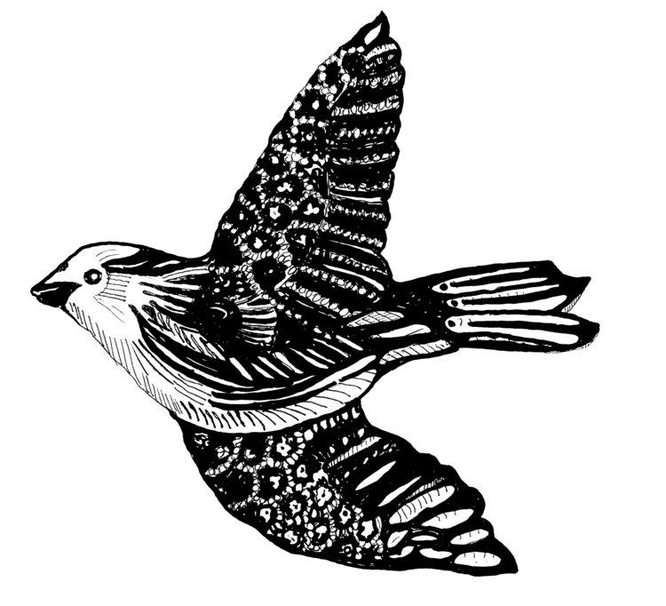New+Bird.jpg