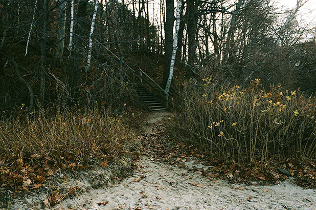 This is a photo of mackworth island off the coast of maine, in autumn, a view from one of the walking trails.
