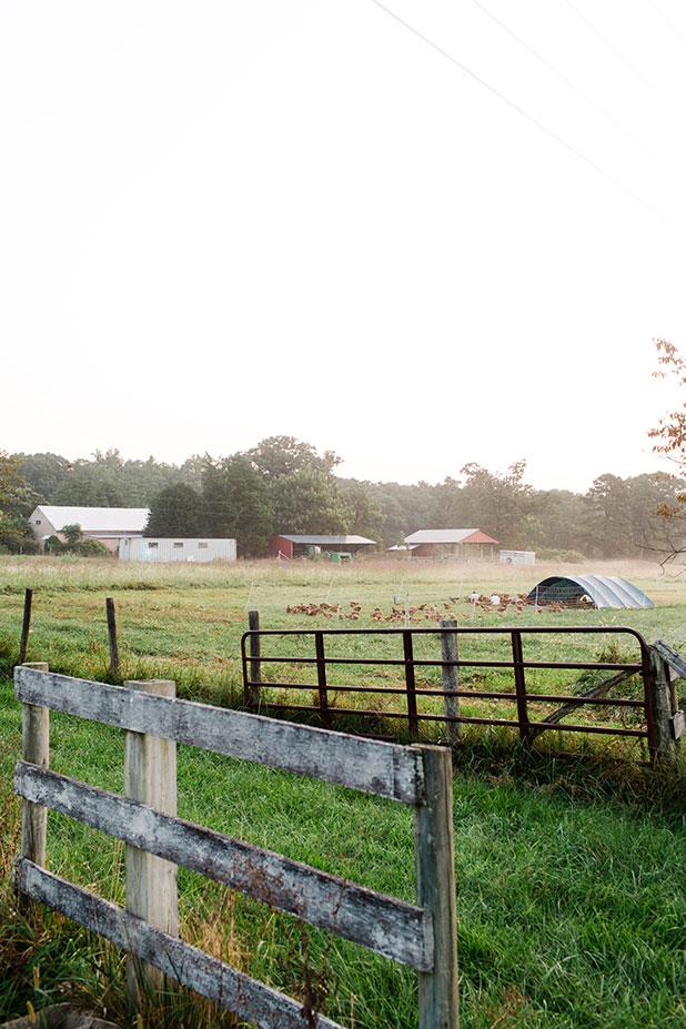 Shirefolk Farm, Richmond Virginia - Sarah Der