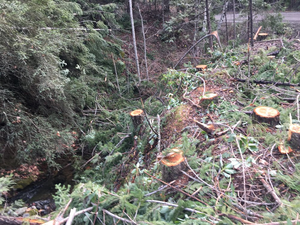 Harmful logging practices along Pleasant Creek that flows into the Upper Rogue.