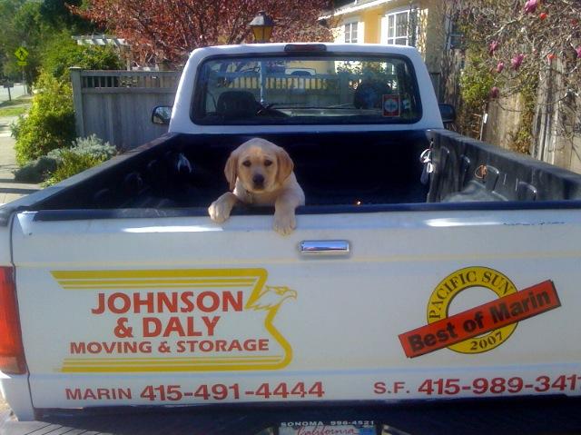 J&D Puppy photo.jpg
