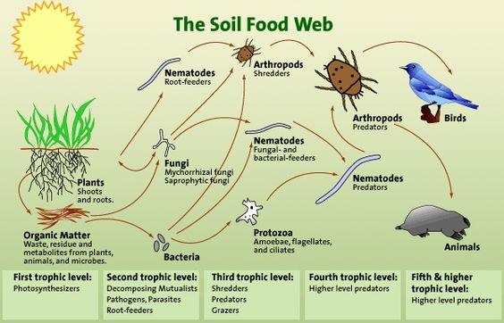 Source:http://www.soilfoodweb.com/
