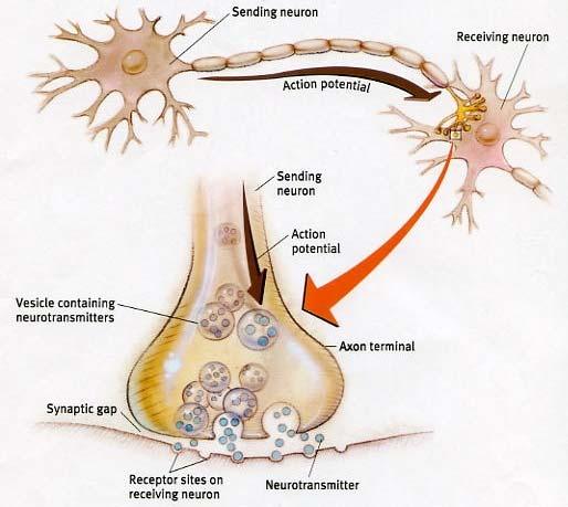 Biomarkers.jpg
