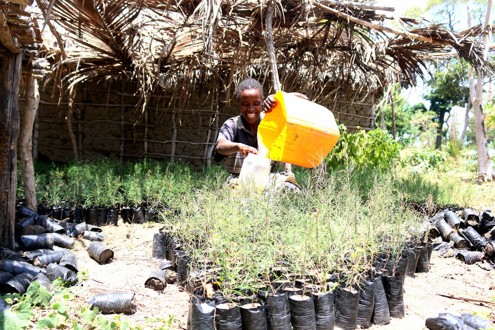 Esther-Katuma-waters-her-tree-seedlings-at-Maisha-Masha-Village-Lamu-County.jpg