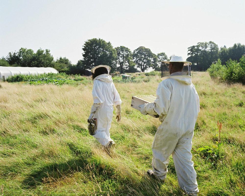 The Beekeepers by Amanda Jackson