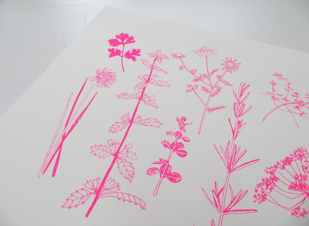 Pink Herbs screenprint.jpg