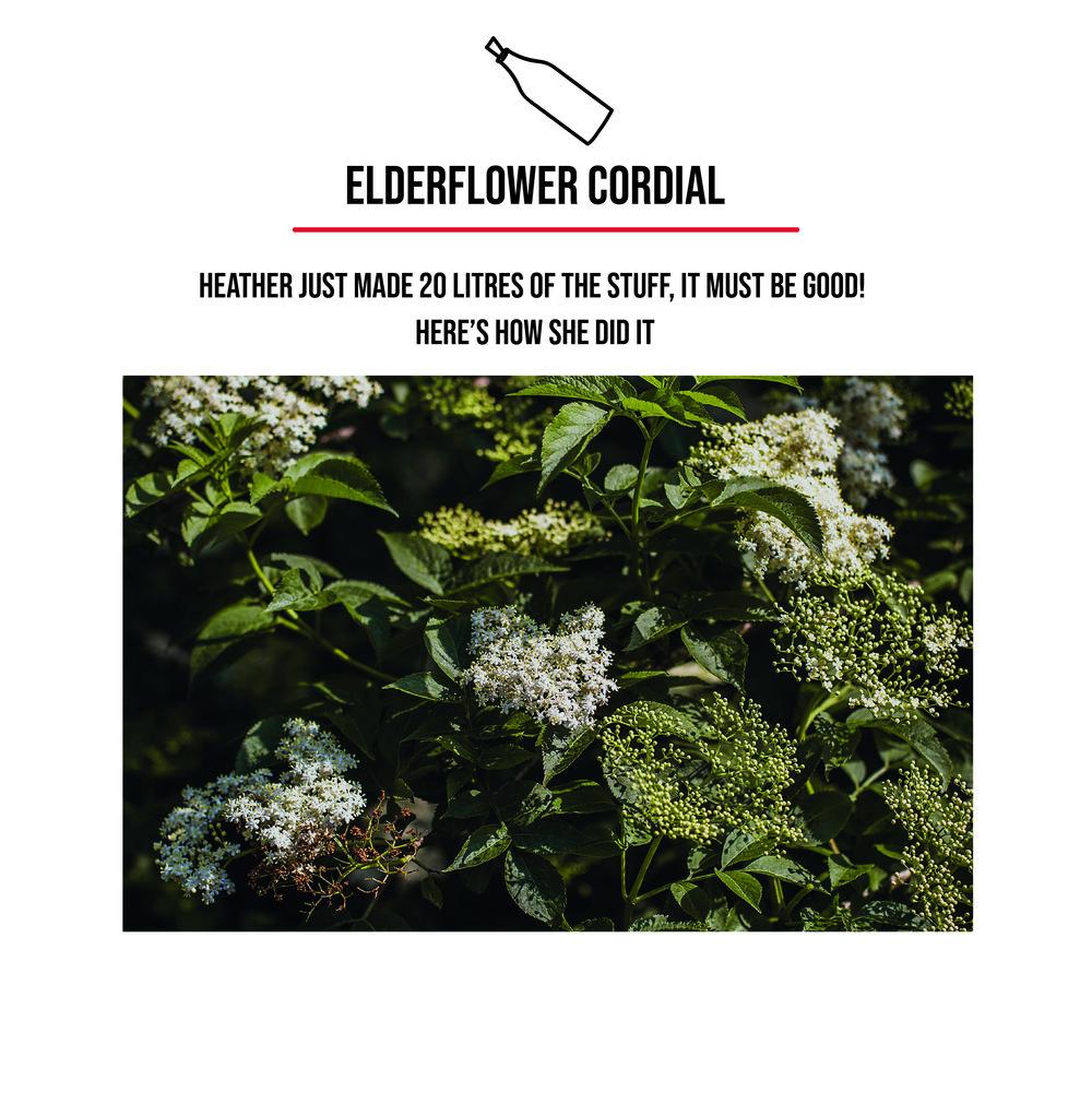 elderflower-01.jpg