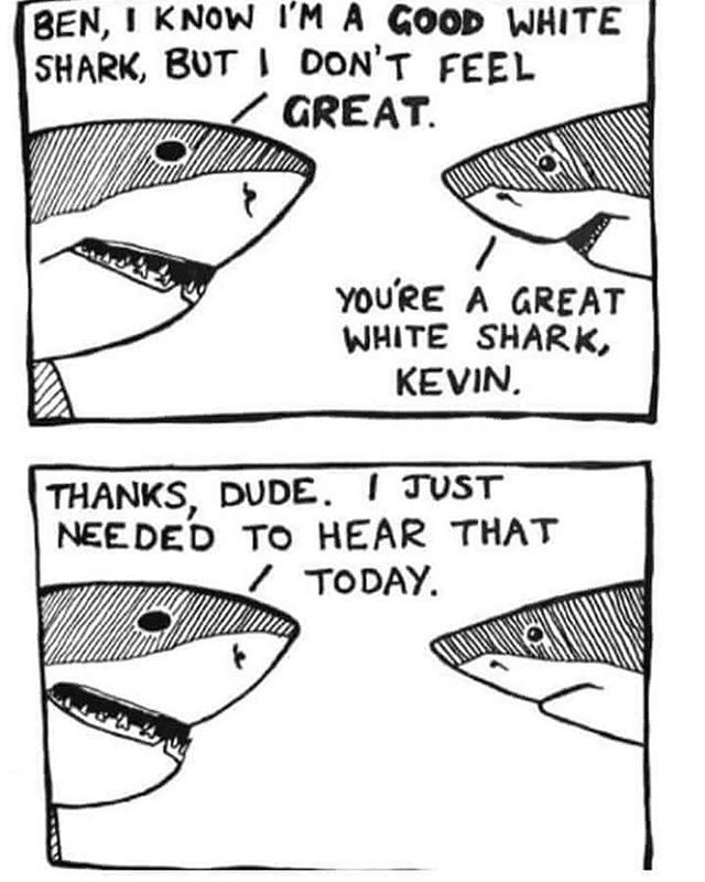 How's everyone's Shark Week going? #sharkweek #greatwhiteshark #sharks #friendsforeels #subscribe #podcast #jaws