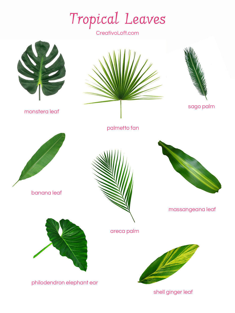 Various popular tropical leaves for floral arrangements.