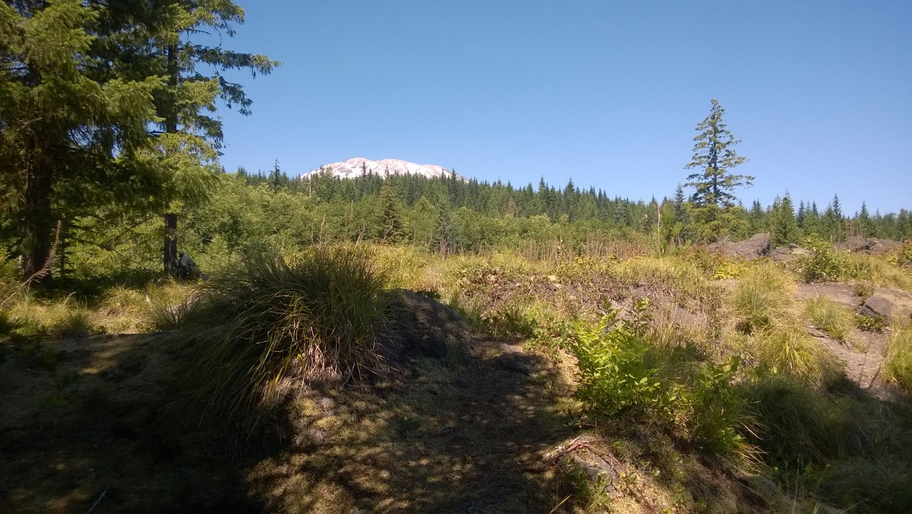 You can just barely see Mt. St. Helens in the distance over some trees.