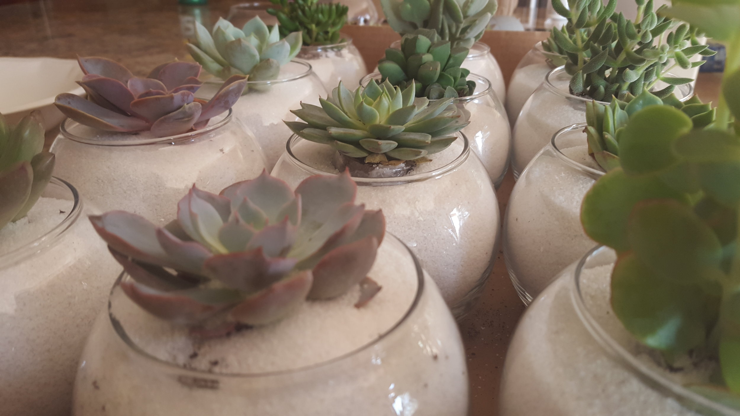 Northwest Pearls: Succulent Centerpieces