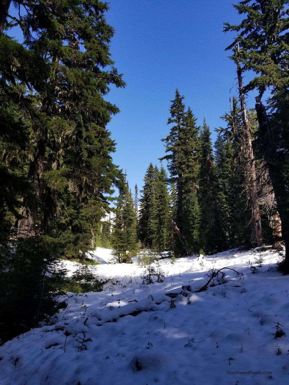 Snowgrass Flats-2.jpg