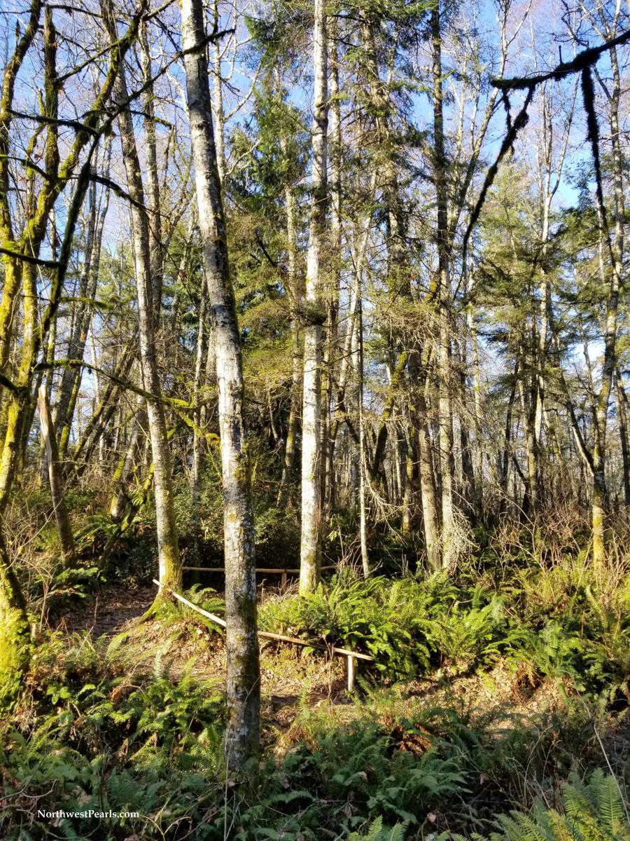 Tolmie State Park-132533.jpg