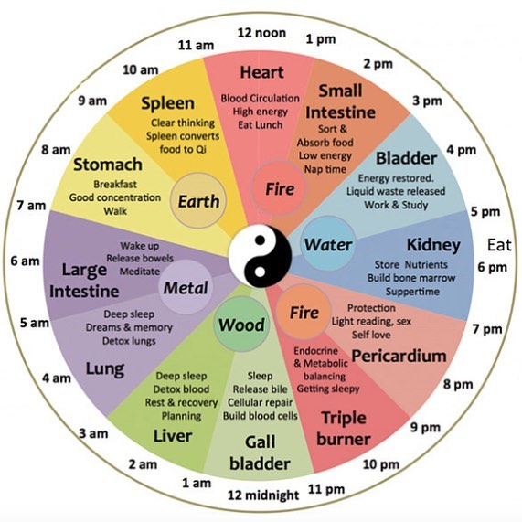 Meet the Chinese body clock. According to traditional Chinese medicine, the body has a strict schedule of self-care, self-regulating various organs within the body at specific times of the day and night. Ever wonder why you wake up around 2 am after maybe drinking one too many drinks? Well, You're liver is in power-cleansing mode from 1-3 👊🤓#chinesemedicine
