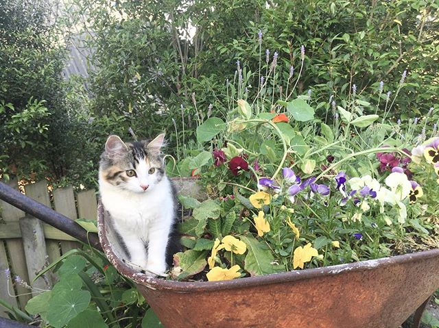 Chewie update 🐱 oh how big our baby is getting 💕 . #ellenratemycat #chewie #kitten #love #positivevibes #growingup #kitty #florestadesign