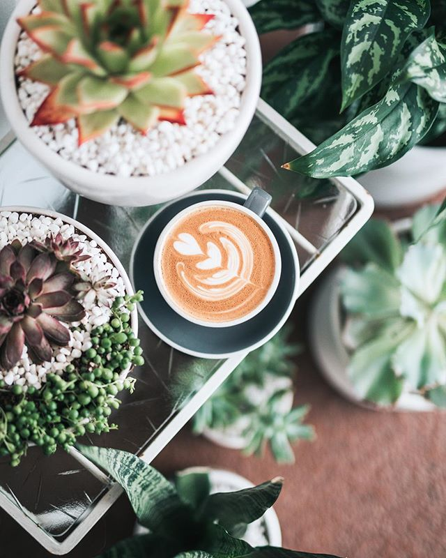 The need for coffee is strong at the moment! Just need a few more plants around me and it would be bliss 🤗 . . 📷: @unsplash . . #designerlife #florestadesign #floresta #womanempowerment #graphicdesign #ladybossnetwork #designstudio #femaleentrepreneur #creativebusiness #womensupportingwomen #shemeansbusiness #bossbabe #design #likeaboss #business #entrepreneur #minimal #creative #bossgal #designinspo #excitingstuff #identitydesign #branding #designquotes #creativeentrepreneur #ui #girlboss #brandlogo #brandinspiration #womeninbiz