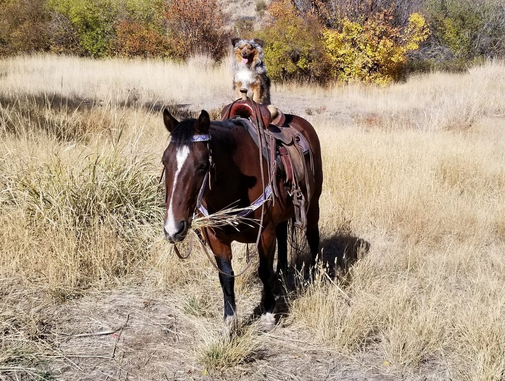 Sophie - Sophie is a 13.3 hh (52in) 9 year old New Forrest Pony.Sophie is suited for beginner to intermediate. Sophie rides excellent in the arena or out on the trails, she is your typical pony always has a dash of sass but that is why we love her!Please call or e-mail us and we will be glad to tell you about Sophie. She is a super fantastic horse!Riding level: Beginner/Intermediate