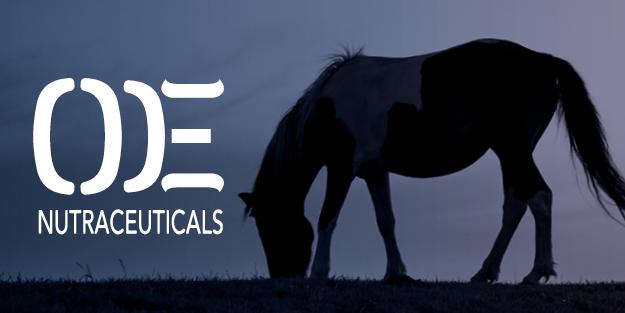 outlaw_equine_tile2.jpg
