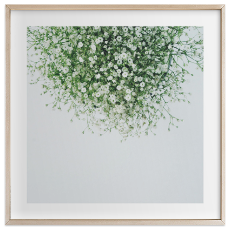 Gypsophila Limited Edition Print