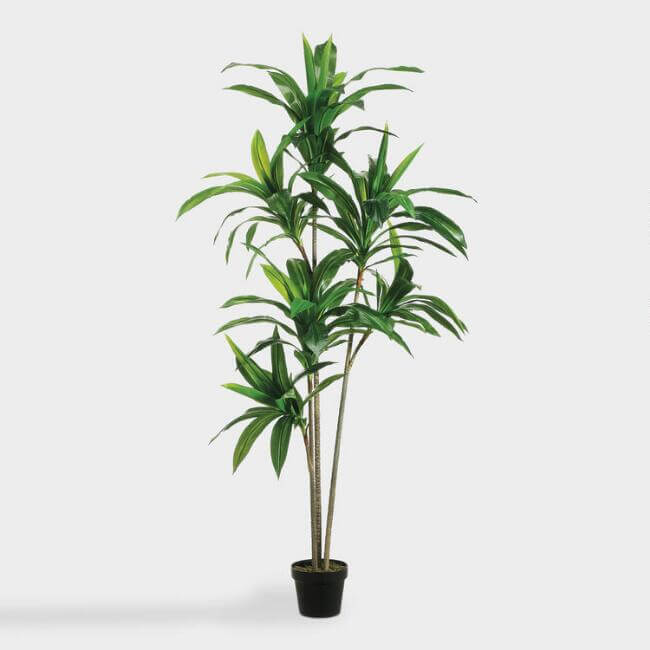 Faux Dracaena Plant