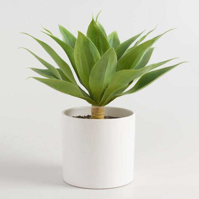 Faux Potted Agave Plant