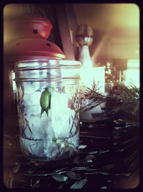 Epiphany Seed