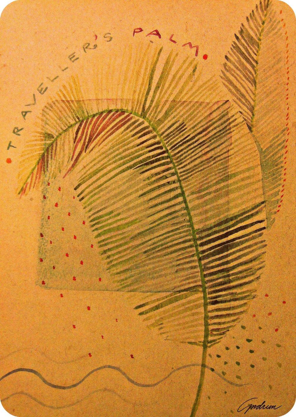 Traveller's Palm