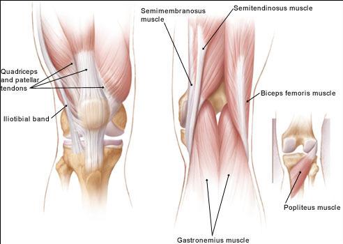 knee-muscles-1.jpg