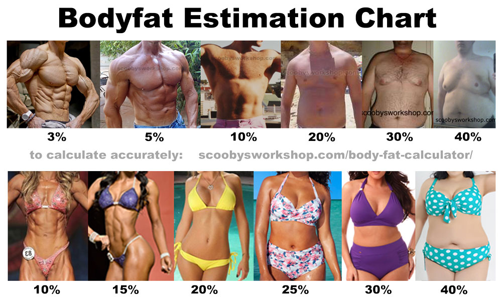 visual-bodyfat-estimation-chart-men-women.jpg