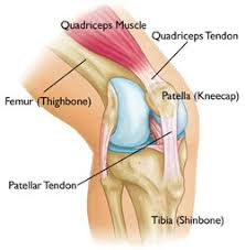 Stress on the patella tendon or deeper in onto the ACL will led to severe knee pain and injuries.