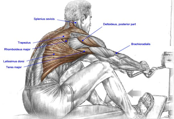 muscle123_seated_row.jpg