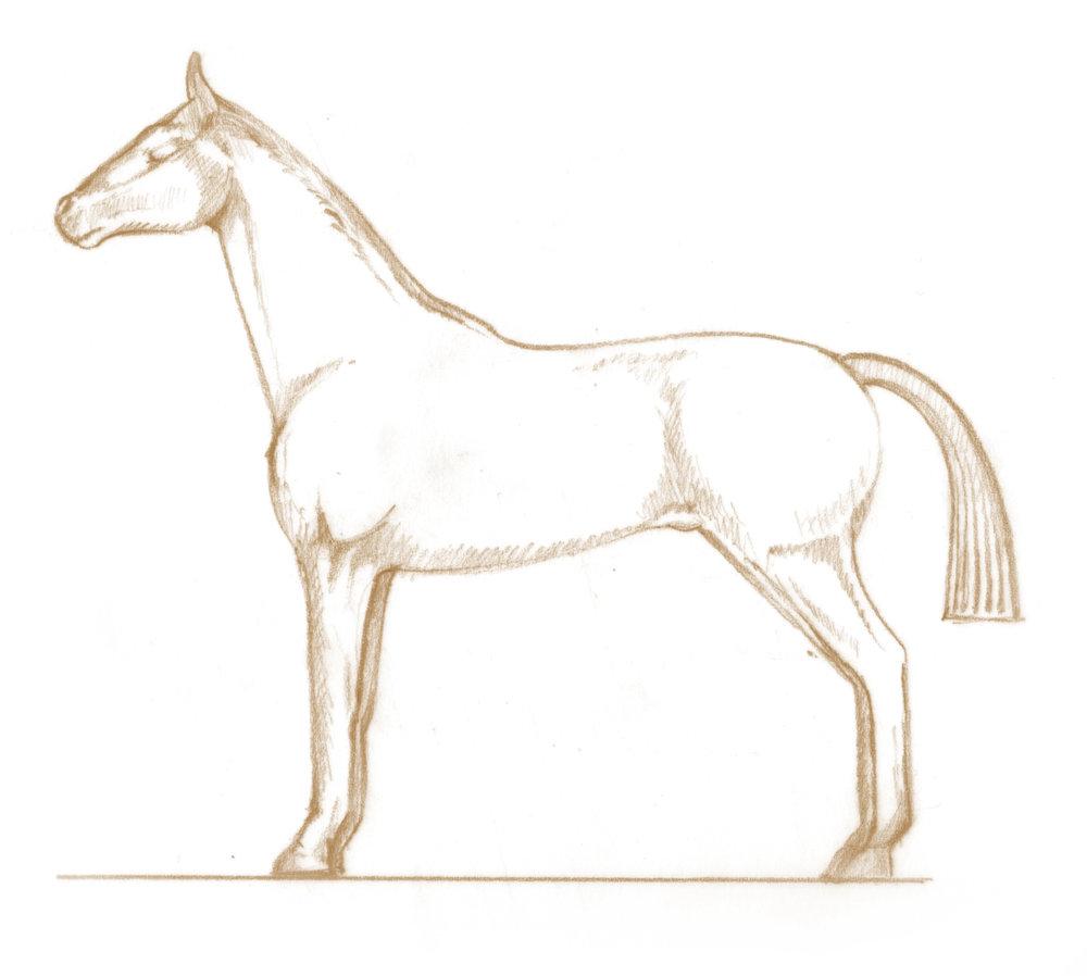 Percy_Horse.jpg