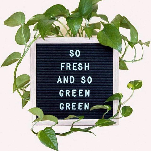 We are now offering  #healing 🌱 #ctfocbd oils and skin care. #fullspectrum #organic #vegan #green #healthy #skin #cbdskincare #glo krystalmcshane.myctfocbd.com for more info