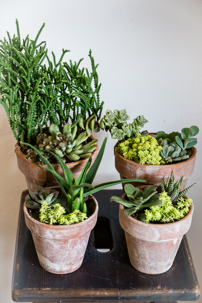 Bear Creek Succulents