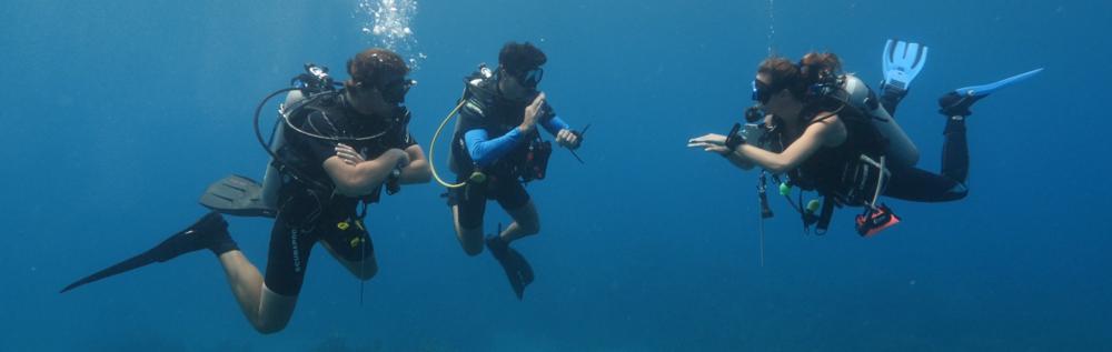 roatan divers divemaster program west end