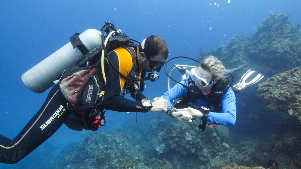 roatan divers divemaster training bay islands