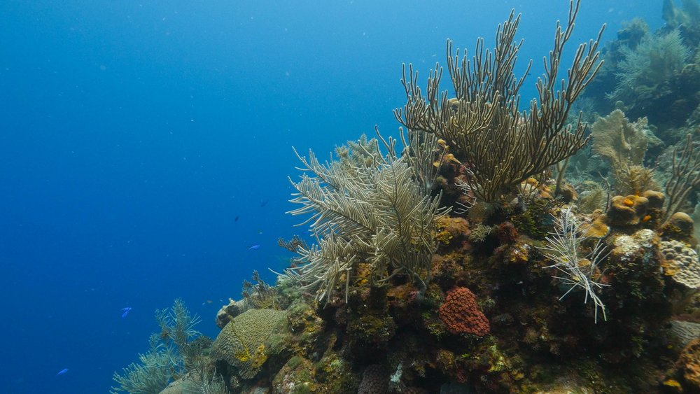 roatan divemaster internship underwater