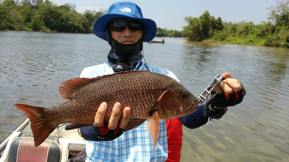Bolgoda Lake Fishing Mangrove Jack.jpg