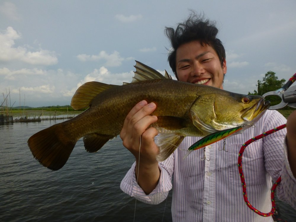 Wild Golden Barramundi Fishing Bolgoda Lake.jpg