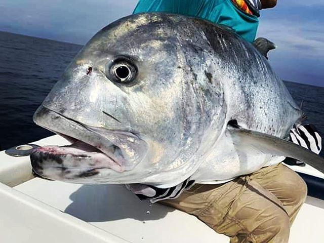 Bad Ass GT  #gtpopping #gtfishing #srilankafishing #sportfishinglanka #topwaterfishing #topwaterlures #poppingfishing