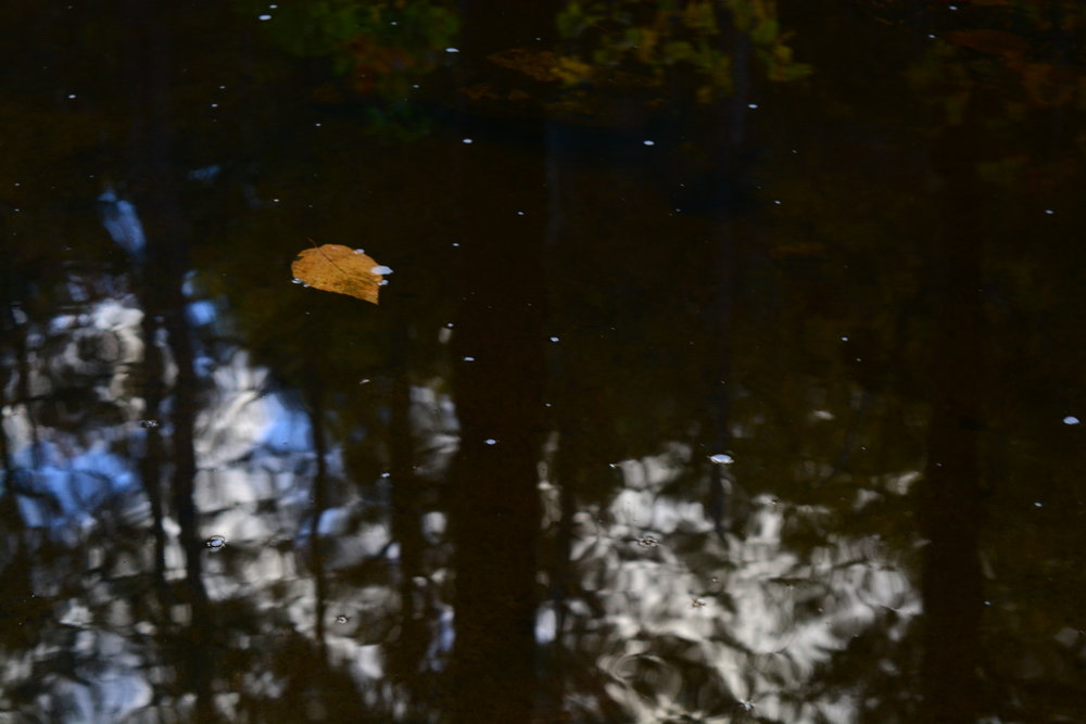 Leaf in an Upside Down Forest