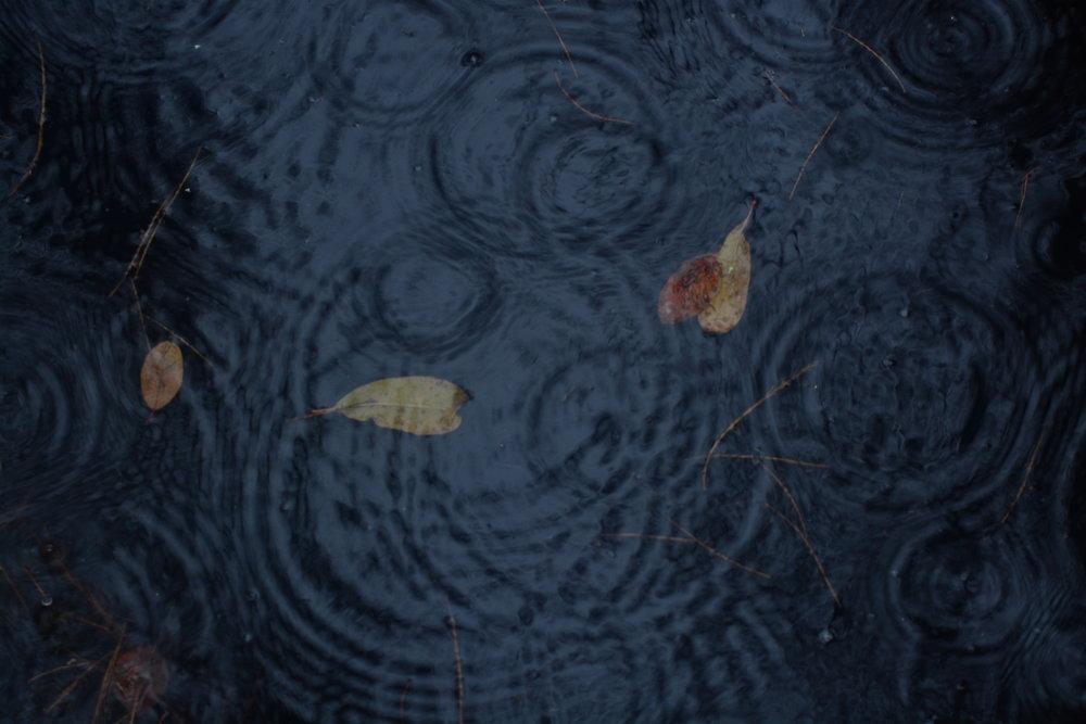 Swamp Ripples (in still water)
