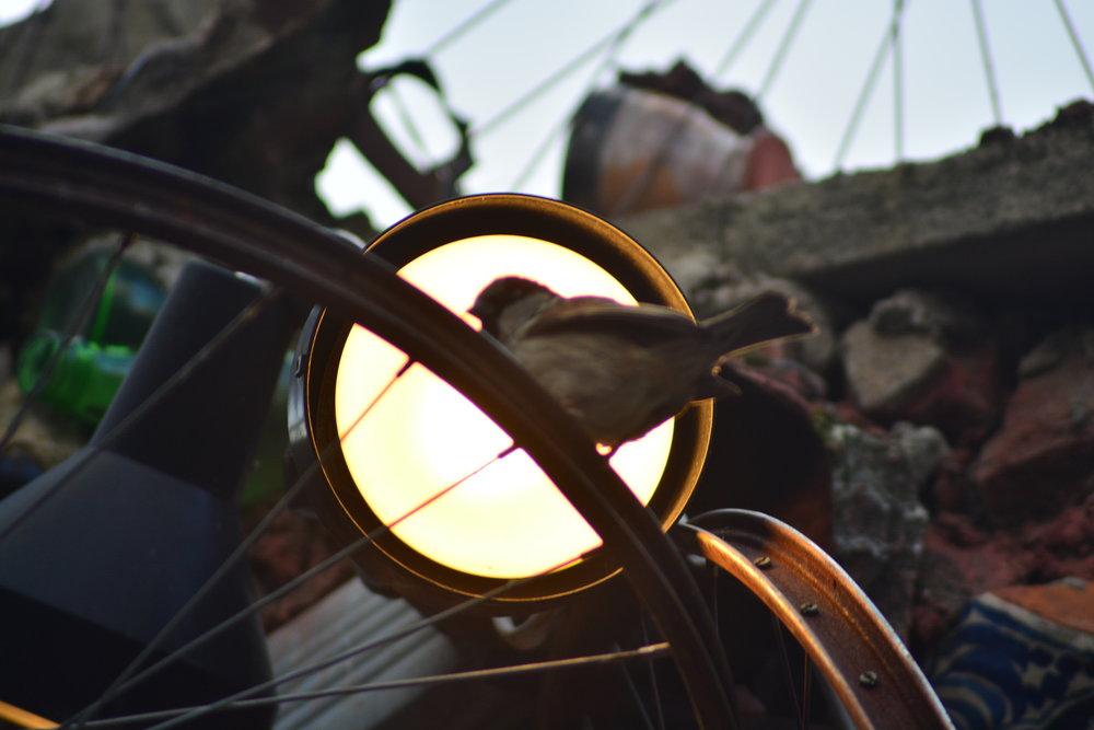 Bird in Magic Garden Under Light