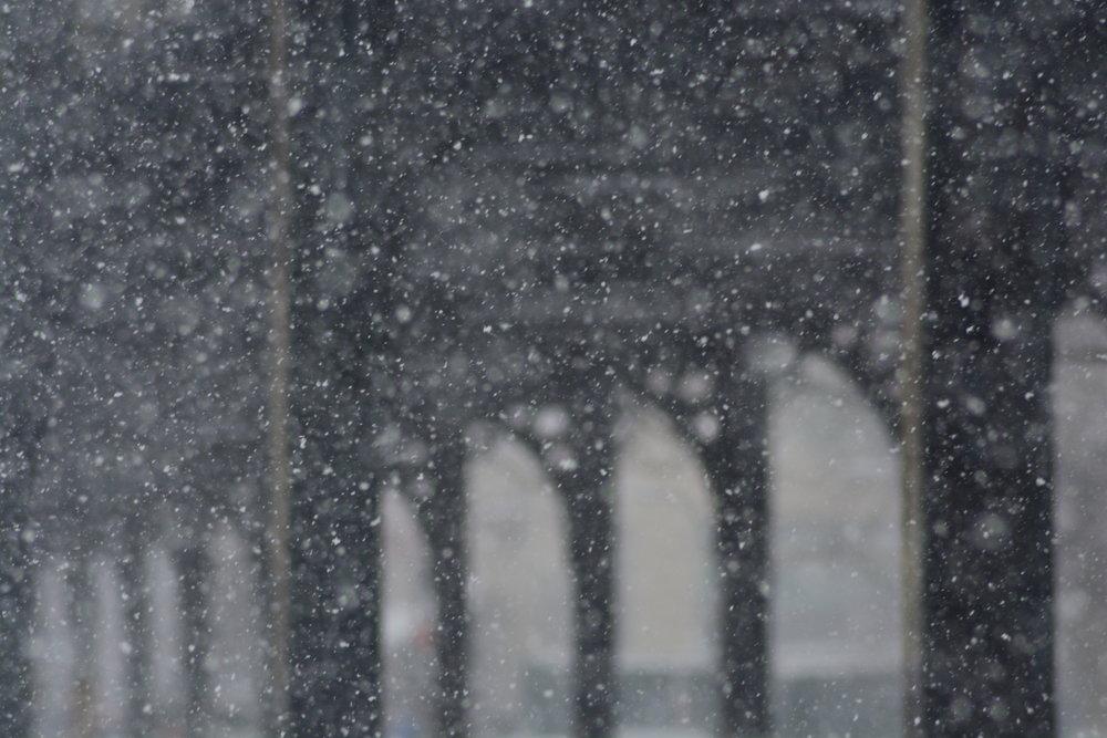El Tracks in the Snow