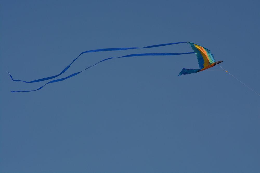 Boardwalk Kite