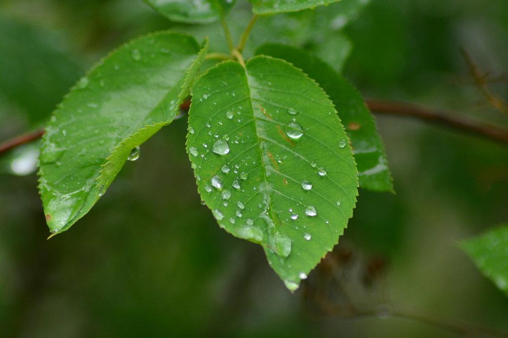 Post Summer Rain