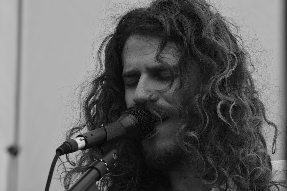 Alex P Lion