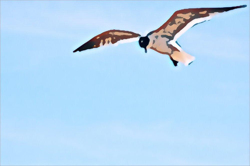 Tern at Coney