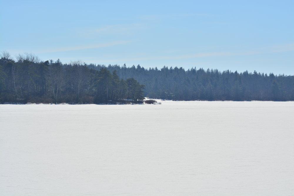 Frozen Lake // Pines